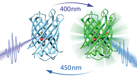 Ultragyors lézerspektroszkópiai kísérletek a Dronpa nevű fluoreszcens fehérjén. Karunk kutatója a Nature Chemistry-ben megjelent cikk társszerzője