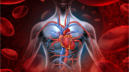 Bécsben tartott kongresszust az Európai Kardiológus Társaság
